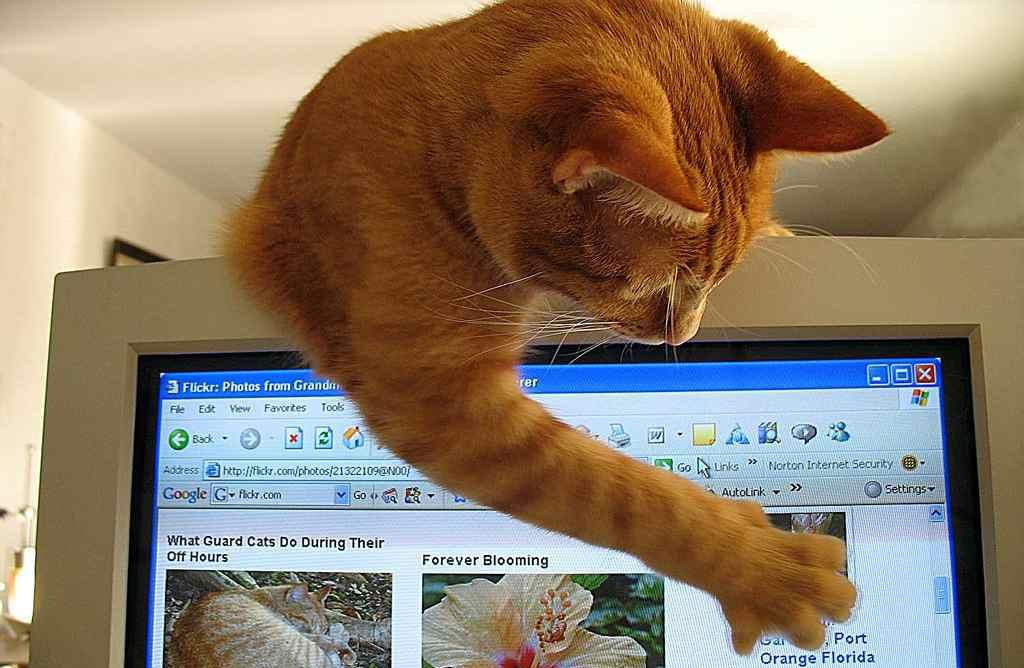 Questions Funny Cat Funny Cat Jpg