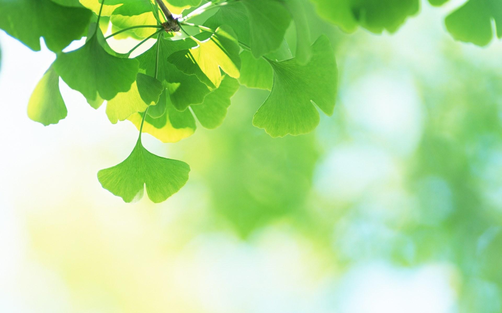 листья зелень фокус  № 1341615  скачать